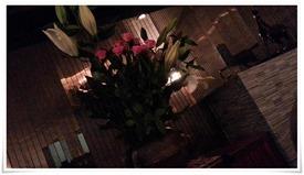 綺麗なお花が@SNACK オリーブ