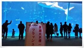 黒潮大水槽@いおワールド かごしま水族館