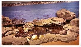 岩の下には?@いおワールド かごしま水族館