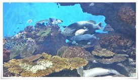 下にうつぼ@いおワールド かごしま水族館