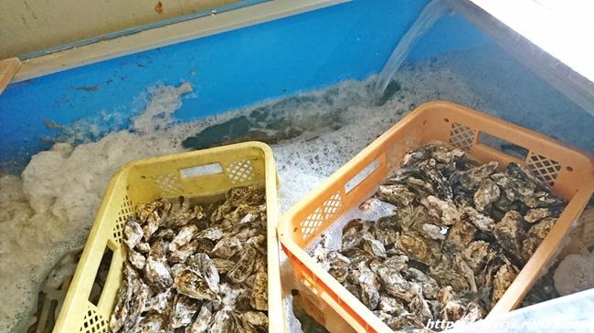 大量の牡蠣@牡蠣の蔵