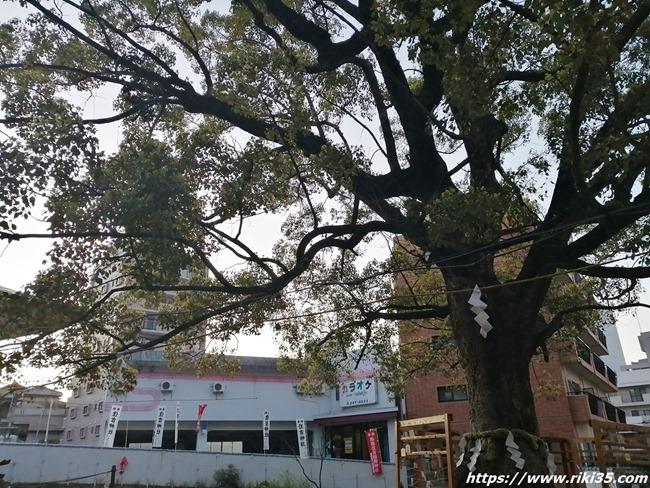 住吉神社の大木